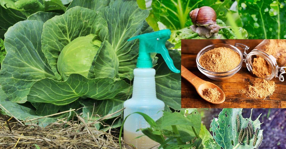 Как избавиться от муравьев на огороде: 4 способа, 2 метода и характеристики вредителя