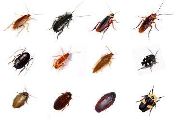 Виды тараканов – фото и описание каждого из них
