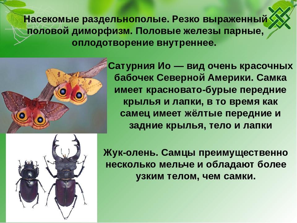 Половой диморфизм | info-farm.ru