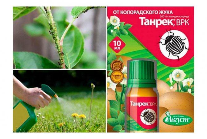 Березовый деготь против вредителей в саду и огороде