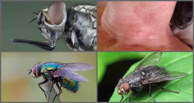 Какие мухи кусаются и почему?