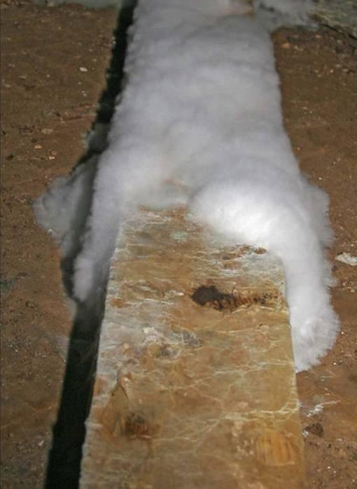 Как избавиться от грибка в погребе: методы обработки стен от плесени