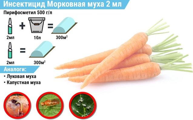 Морковная муха и как с ней бороться — ботаничка.ru