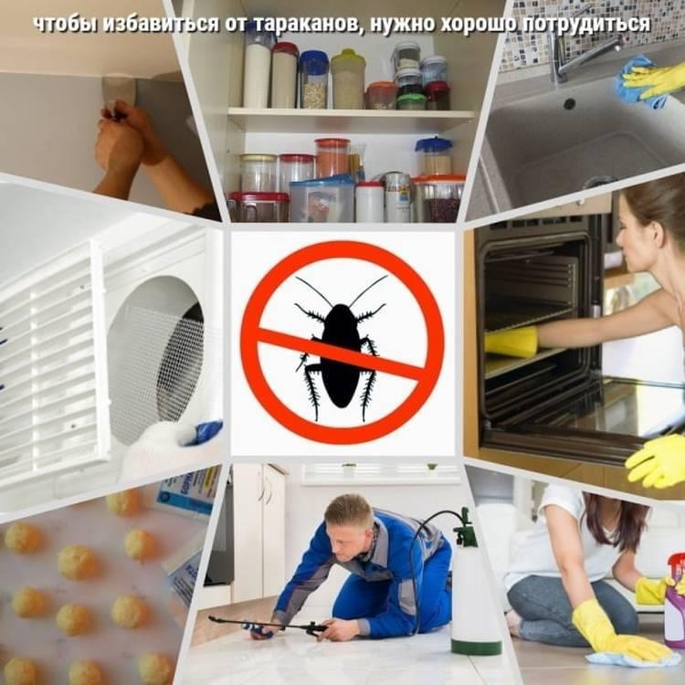 Как избавиться от тараканов быстро, просто, навсегда - лайфхакер