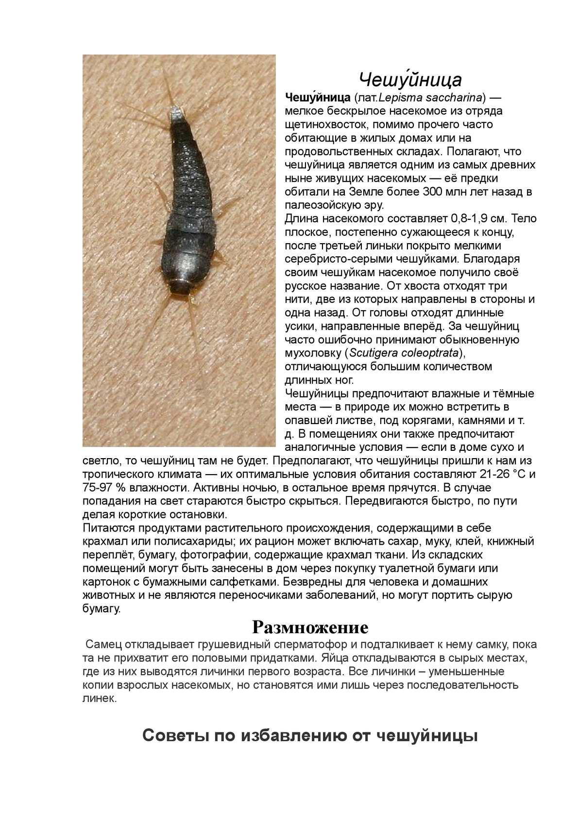 Как избавиться от чешуйницы в квартире навсегда? | ubirahka.ru