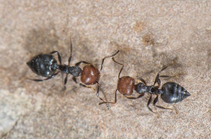 Сколько живут муравьи разных видов?