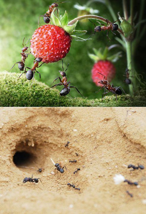 Сколько у муравья ног, что делают лапки: разбираем внимательно