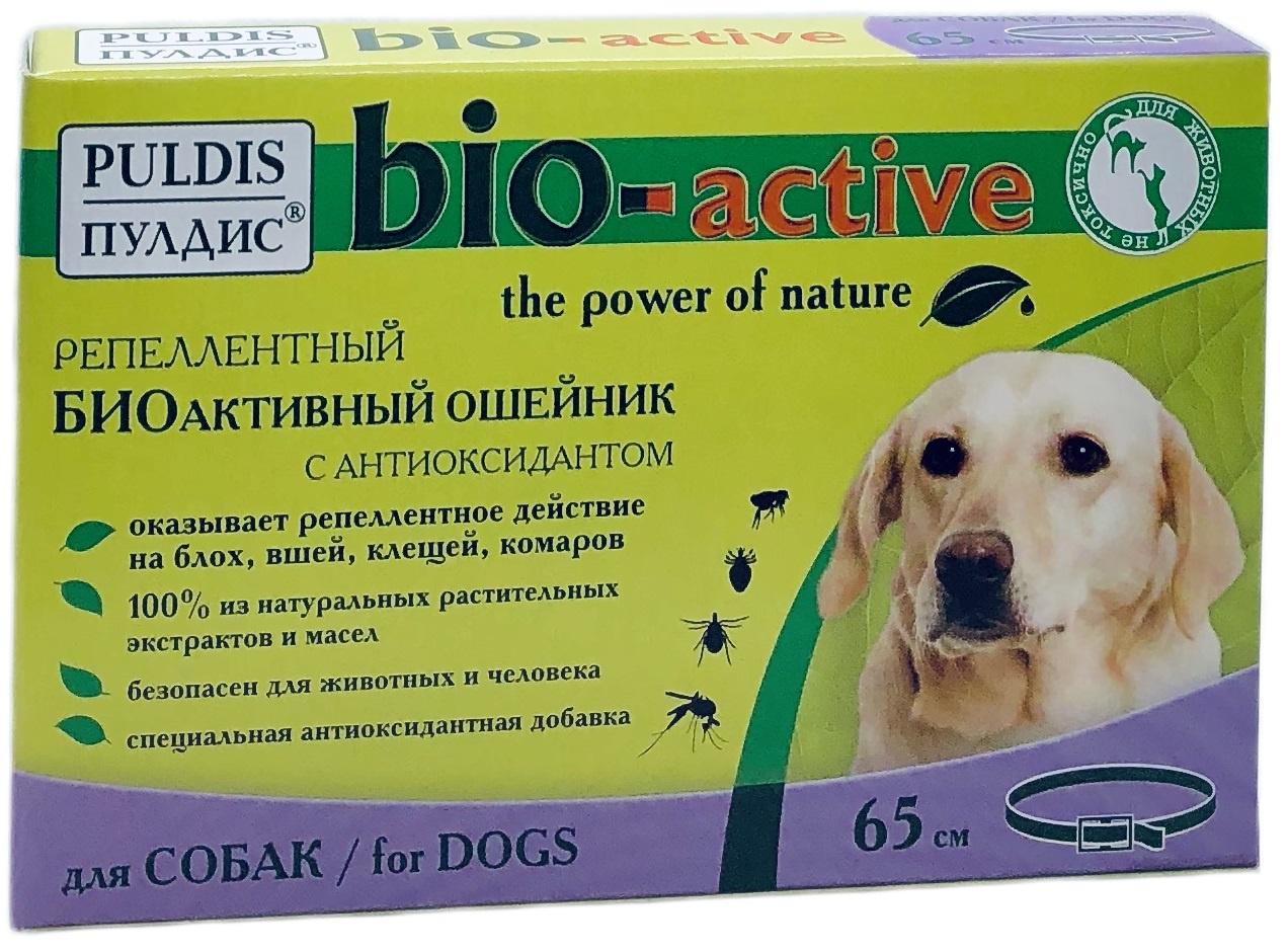 Лучшее средство от клещей для собак: что эффективнее?
