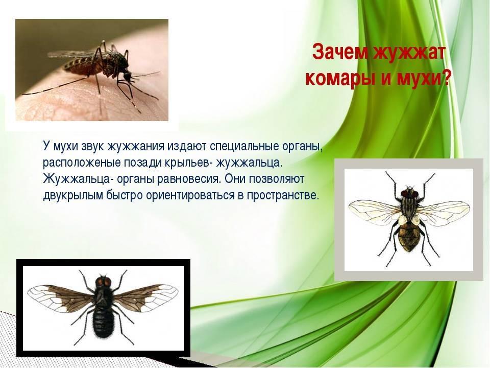 Зачем нужны комары в природе - роль насекомых