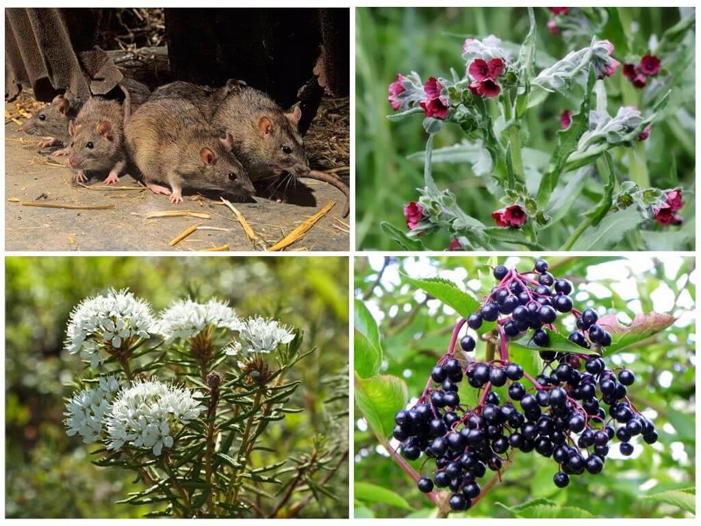 Какой запах не любят мыши: народные средства