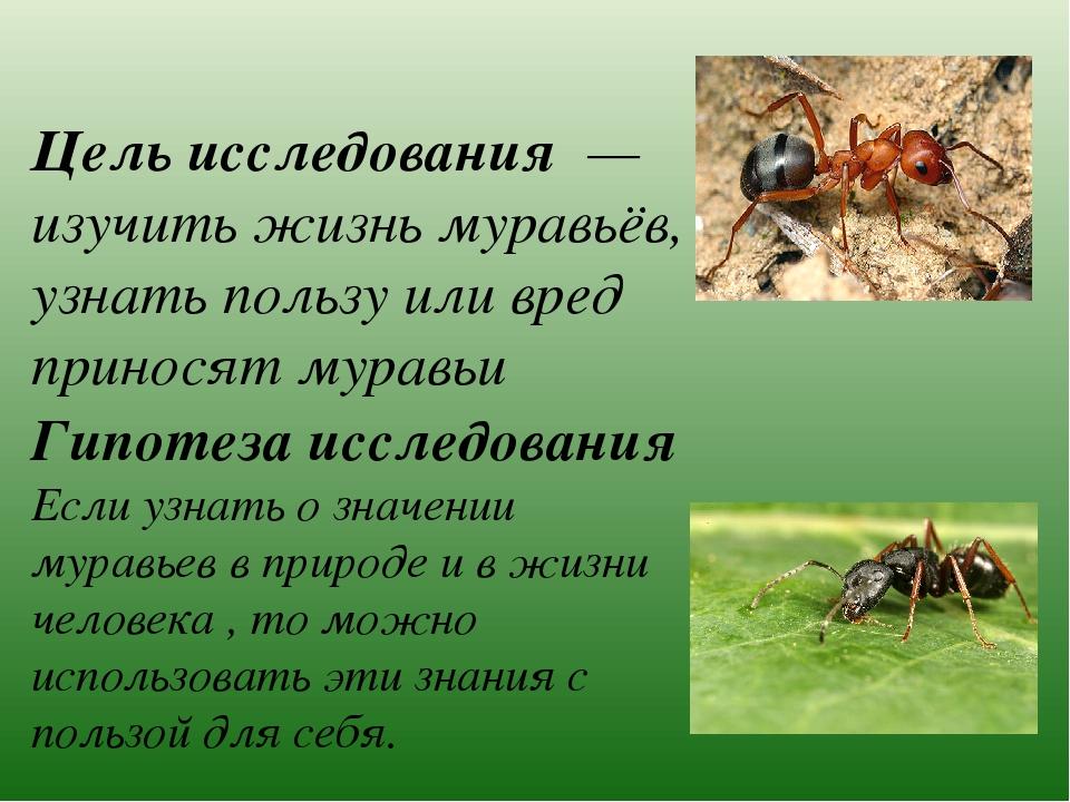 ✅ чем в лесу полезны муравьи - vsezap24.ru