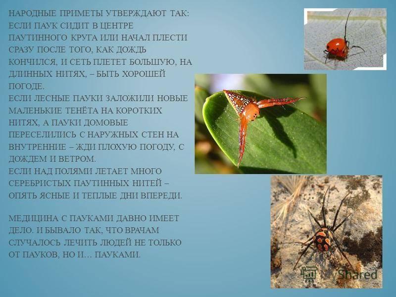 Примета: паук ползет по человеку на руке, голове, по телу, что значит увидеть на себе