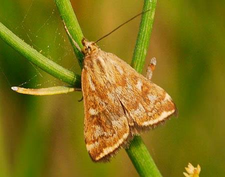 Превращение гусеницы в бабочку: стадия превращения