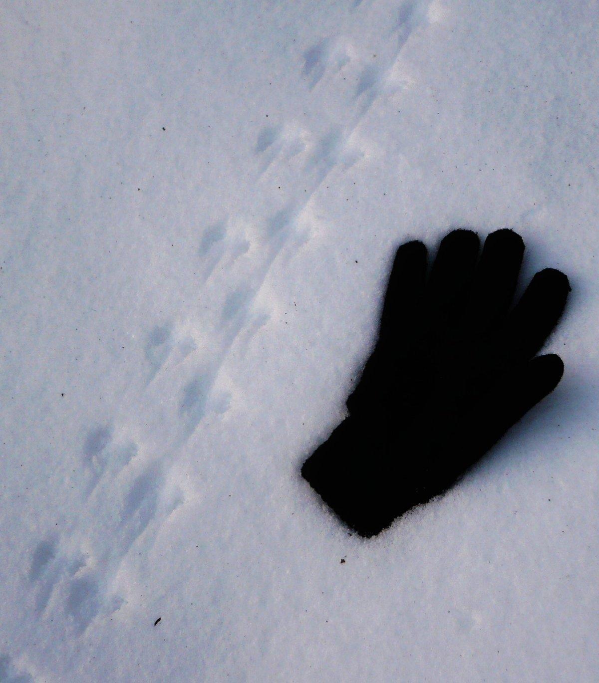 Следы рыси на снегу: как определить местонахождение дикой кошки