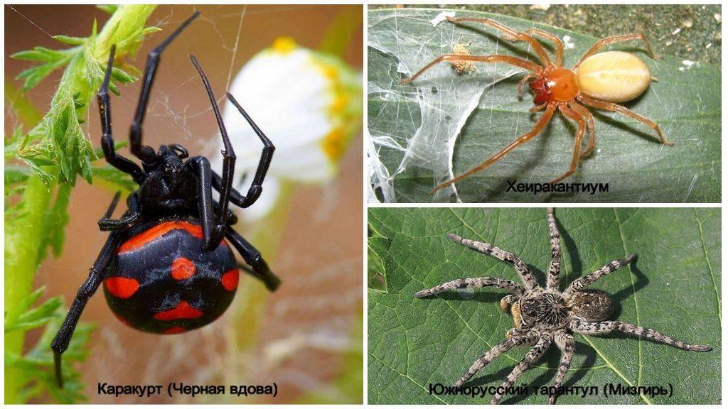 Пауки россии: обзор распространенных видов