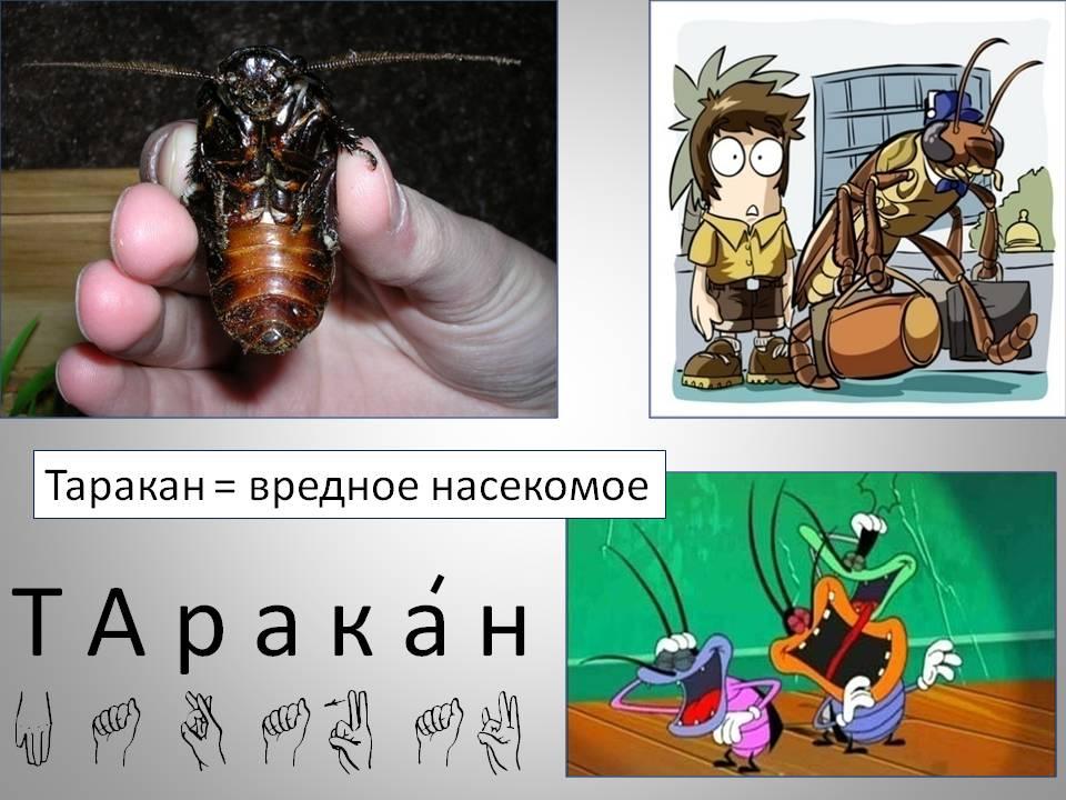 Насколько опасны тараканы в жилище для человека