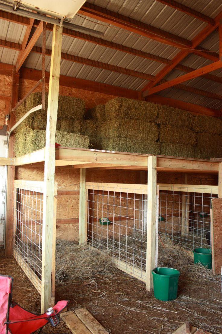 Как избавиться от мух в свинарнике, курятнике, коровнике и козлятнике