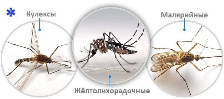 """Кто тут самый вкусный? людей с какой группой крови комары """"любят"""" больше"""