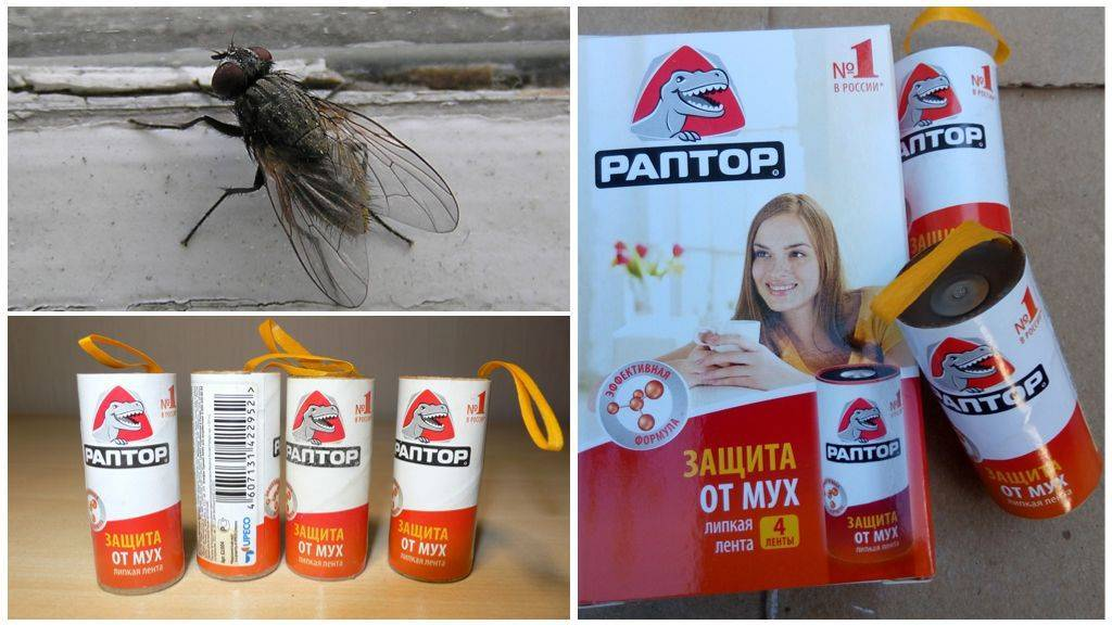 Применение и описание геля раптор от тараканов. самый эффективный гель от тараканов советы бывалых