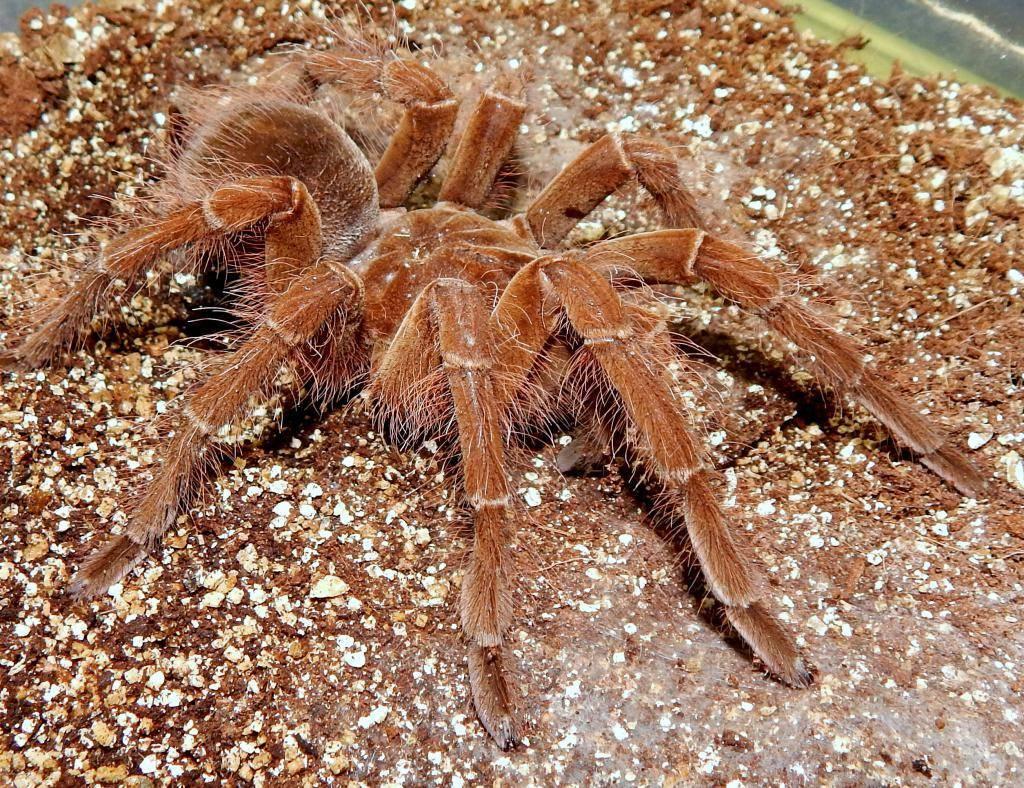 Как выглядят самые большие пауки в мире: топ-5 пауков огромного размера