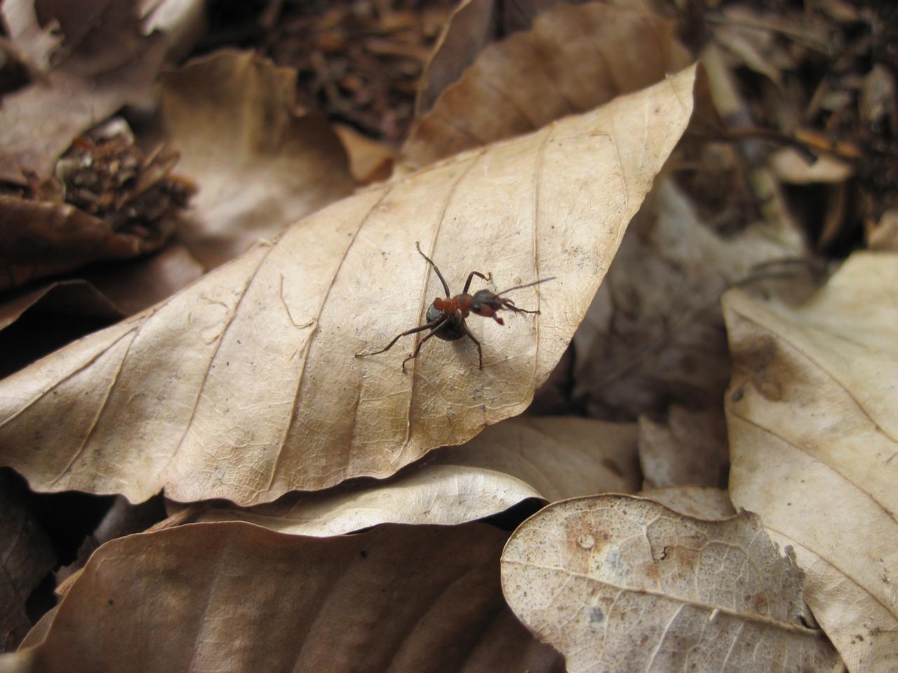 Когда осы впадают в спячку   мой сад и огород