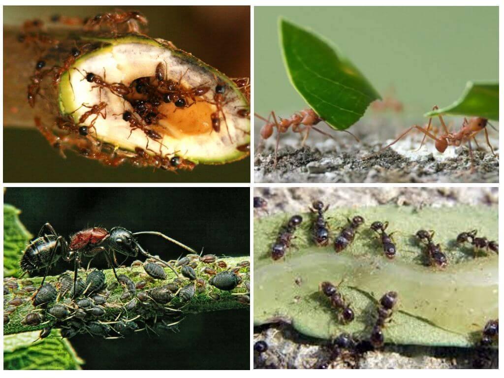Как избавиться от муравьев в цветочном горшке