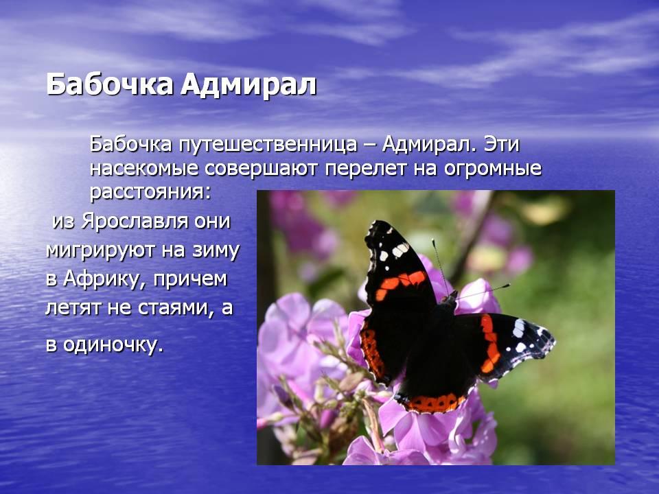 Самые интересные факты про бабочек
