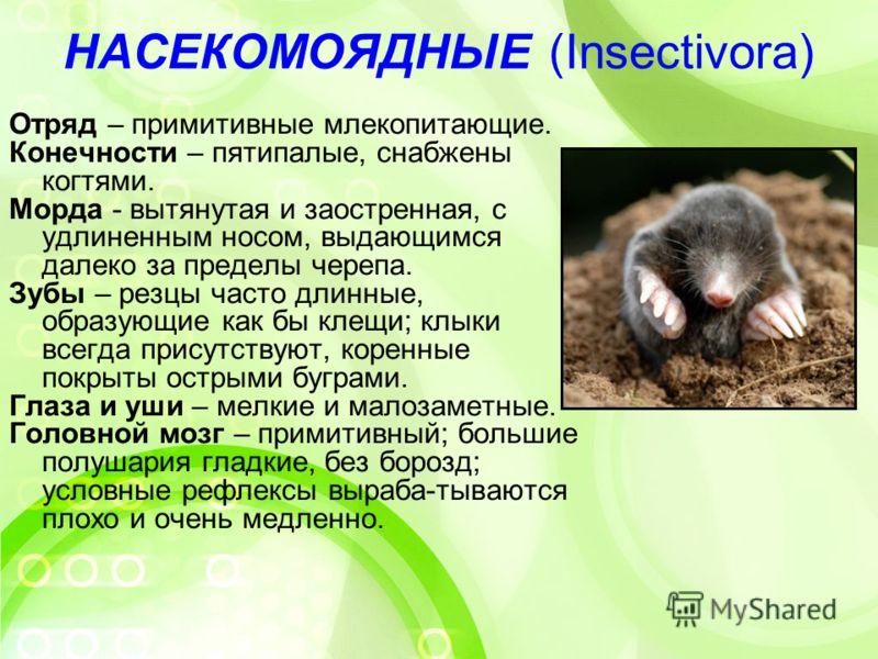 Животное крот: какой он? всё про особенности вида