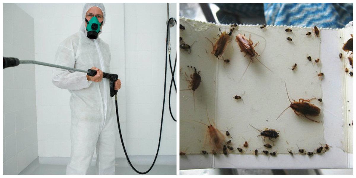 Чем самостоятельно и эффективно травить тараканов в квартире. гели, аэрозоли, ловушки – что выбрать