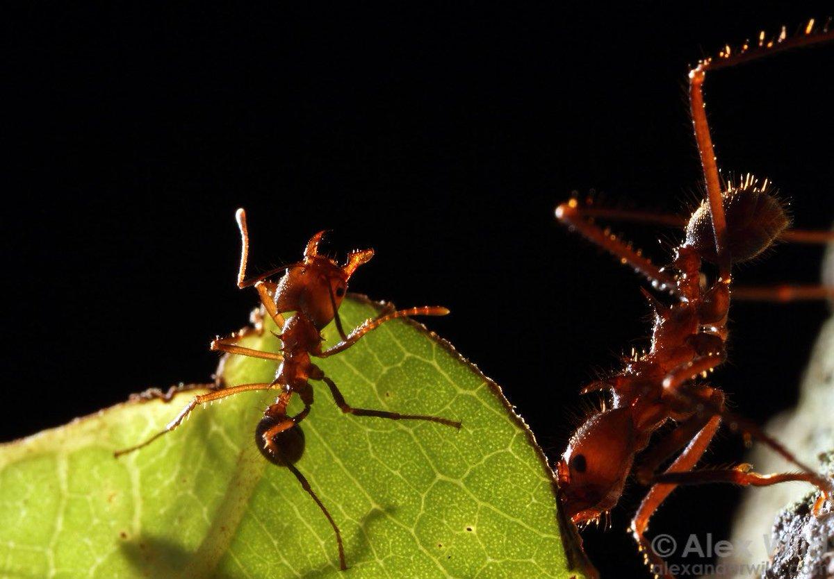 Все виды муравьев: черные, рыжие, желтые и другие разновидности
