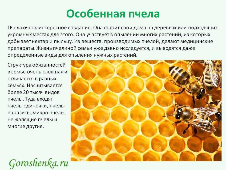 Самые удивительные факты о пчелах