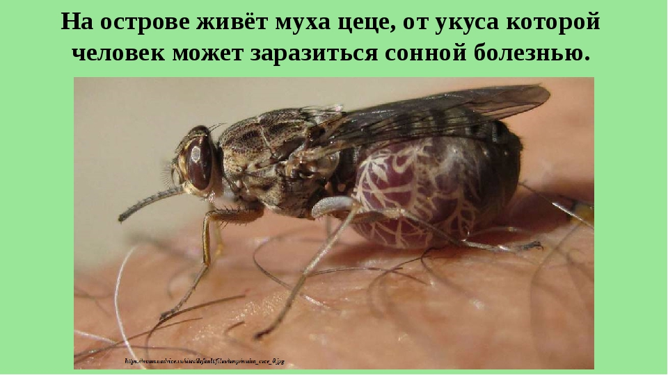 Муха — представитель отряда двукрылых. описание, виды, распространение, жизненный цикл в фото и видео