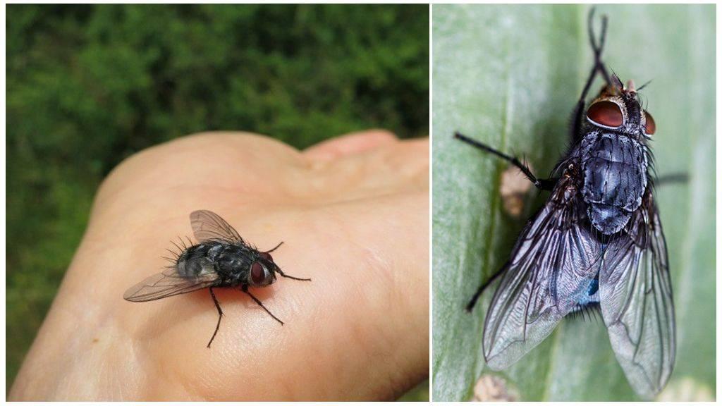 Какие мухи кусаются осенью