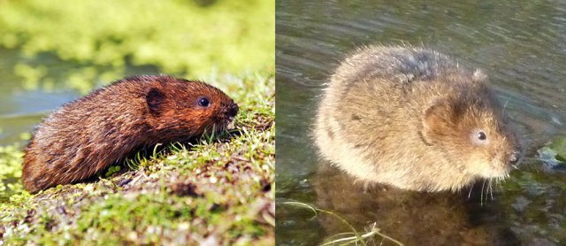 Как бороться с водяными (земляными) крысами на огороде: чем избавиться, народные средства