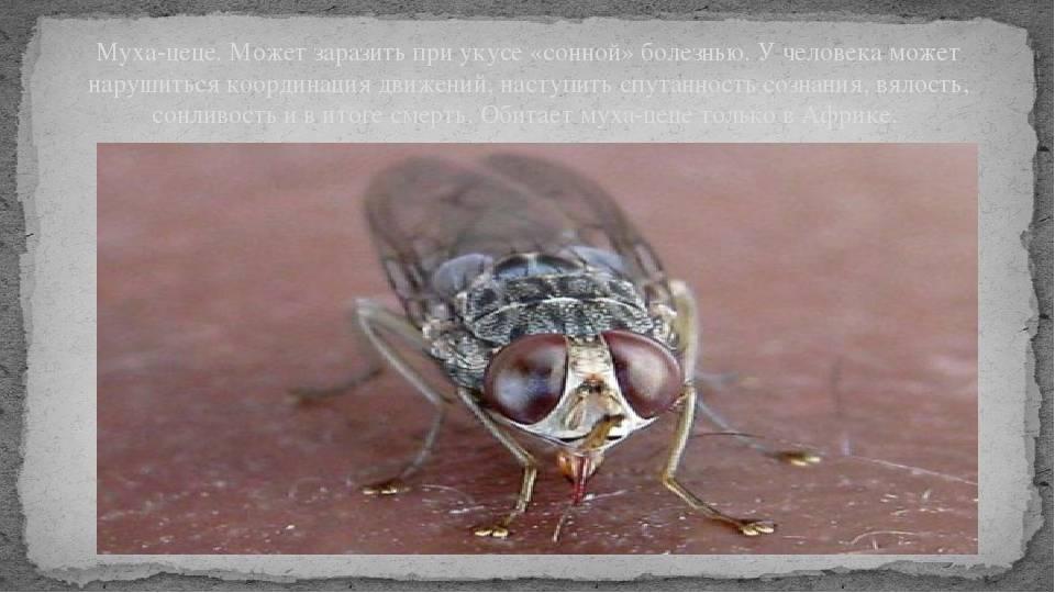Тяжелые болезни переносят мухи летающие рядом