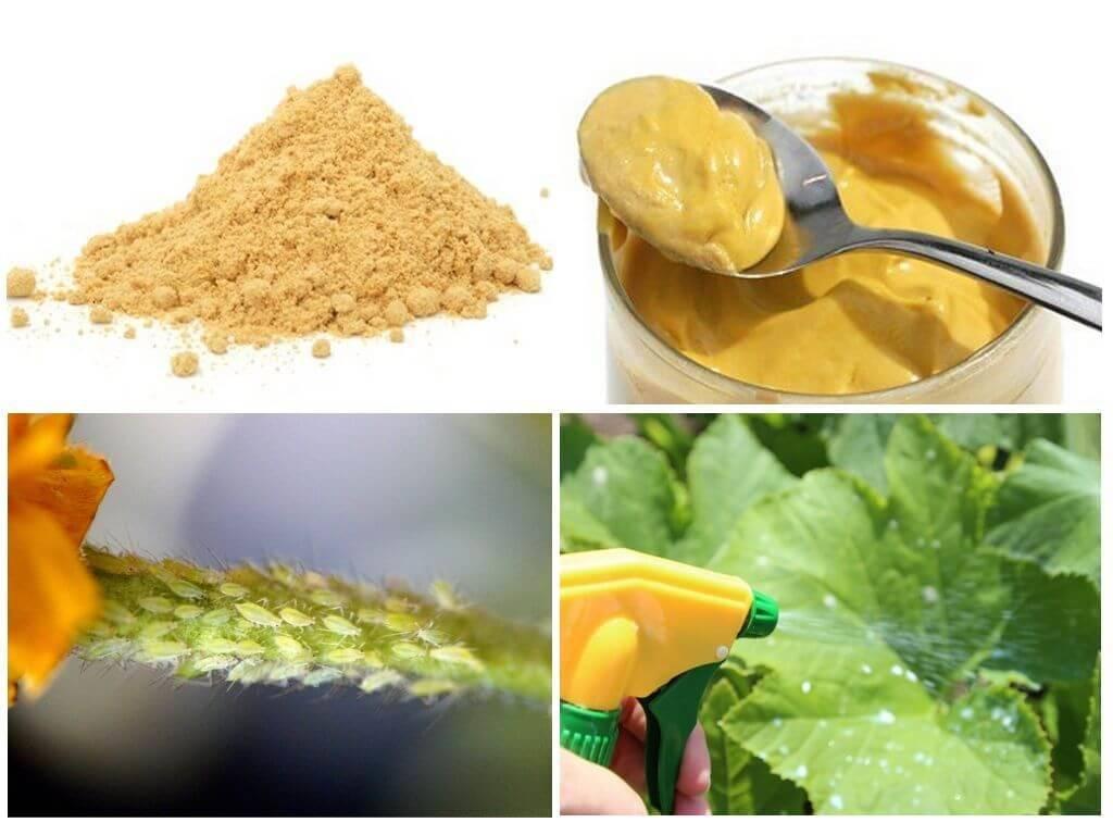Порошок горчицы от вредителей – как применять грамотно