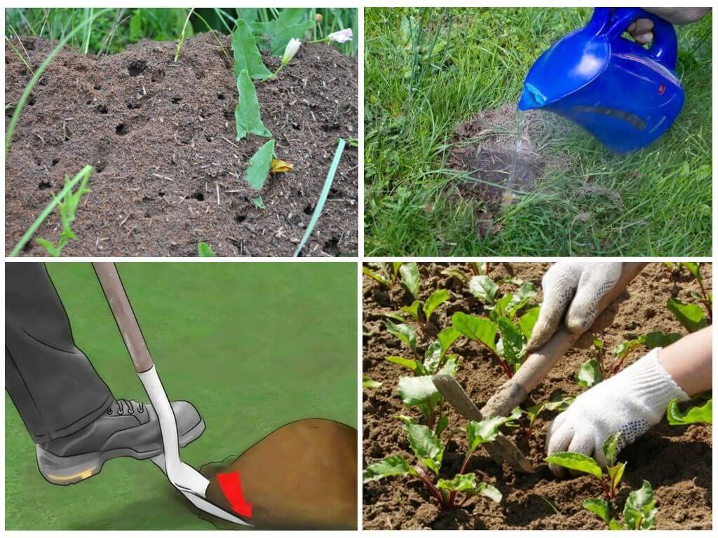 Народные методы и не только: как избавиться от муравьев в теплице