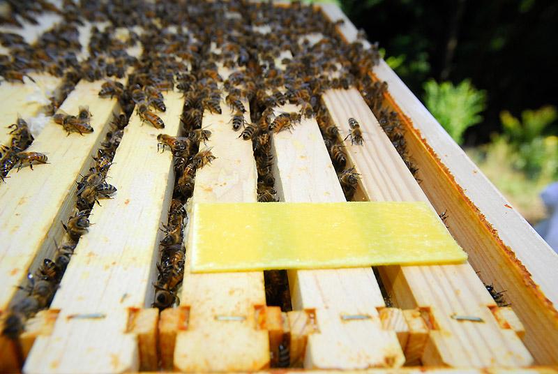 Обработка пчел бипином т: инструкция по применению