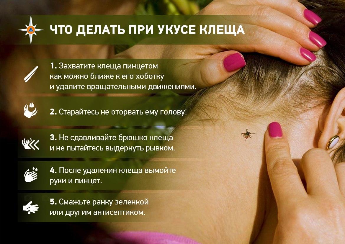 Что делать если укусил клещ? первая помощь, как вытащить клеща? заболевания, передающиеся через укусы клещей. профилактика клещевого энцефалита, прививка.  :: polismed.com