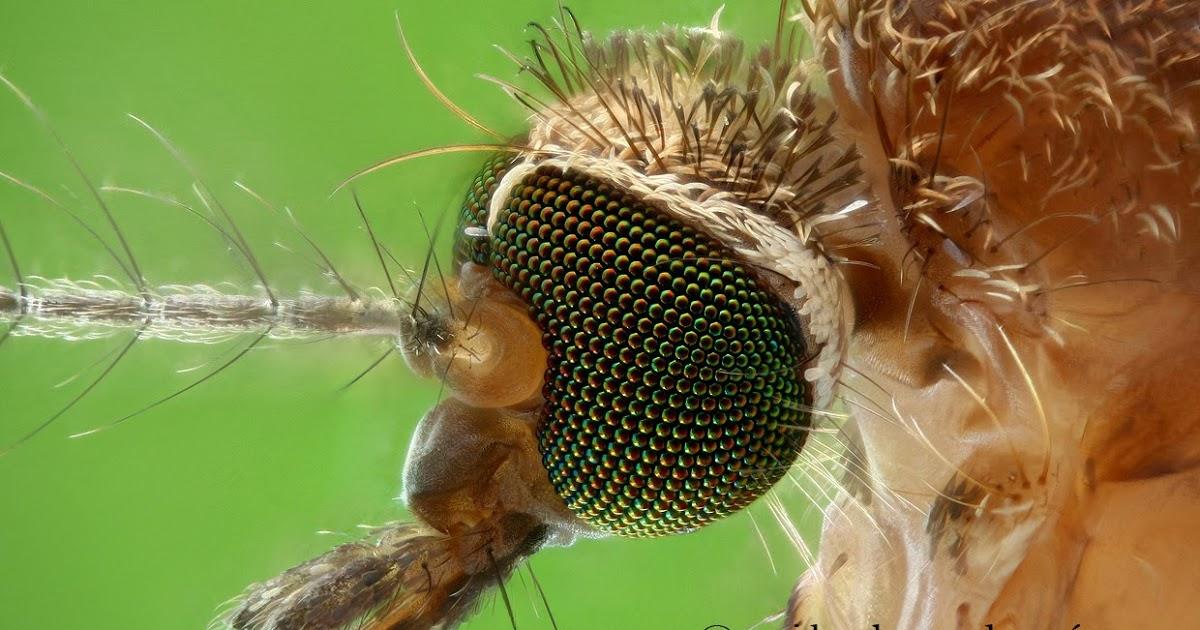 Интересные факты о строении комаров