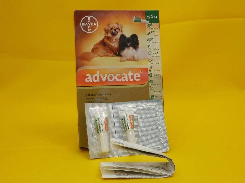 Капли на холку «advocate» для собак: инструкция по применению