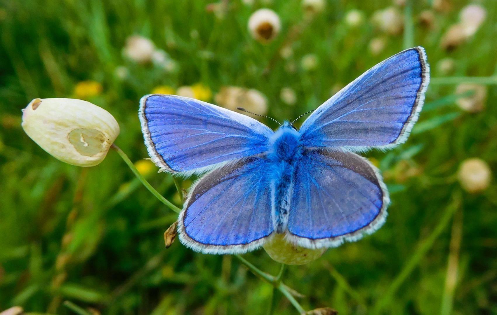 Насекомые подмосковья. часть 1. бабочки. | страна мастеров