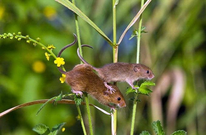 Избавиться от мышей в частном доме: эффективные методы 2021