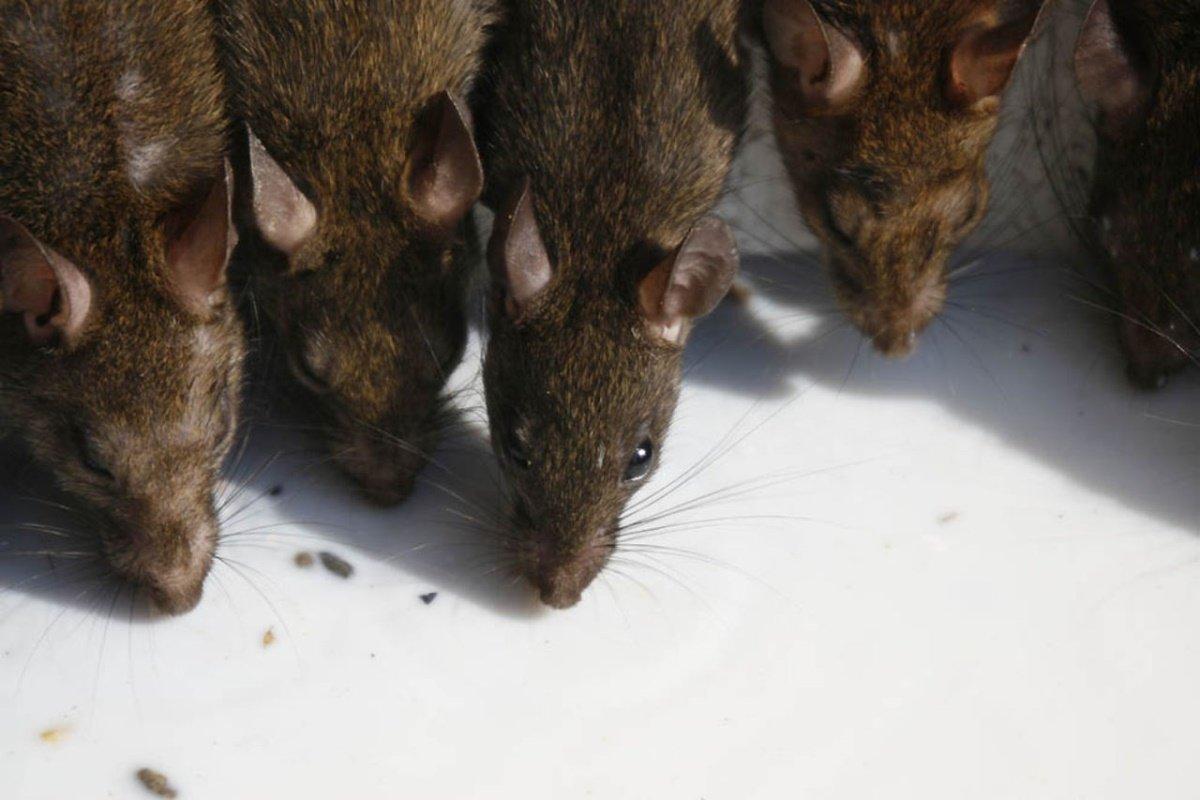 Земмифобия и мусофобия: особенности, причины развития и лечение страха
