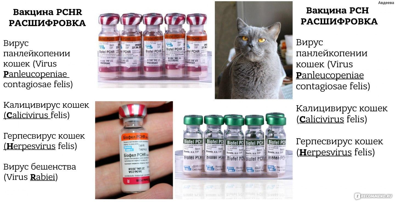 Прививка от блох для кошек, названия вакцин, противопоказания