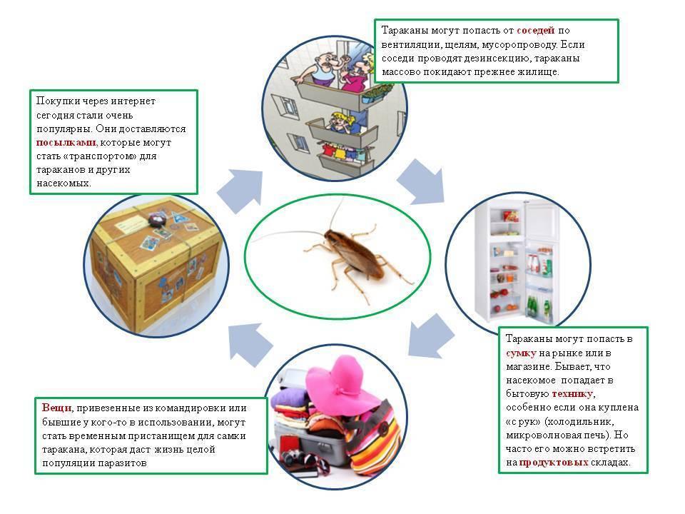 Как навсегда и быстро вывести тараканов из квартиры или частного дома