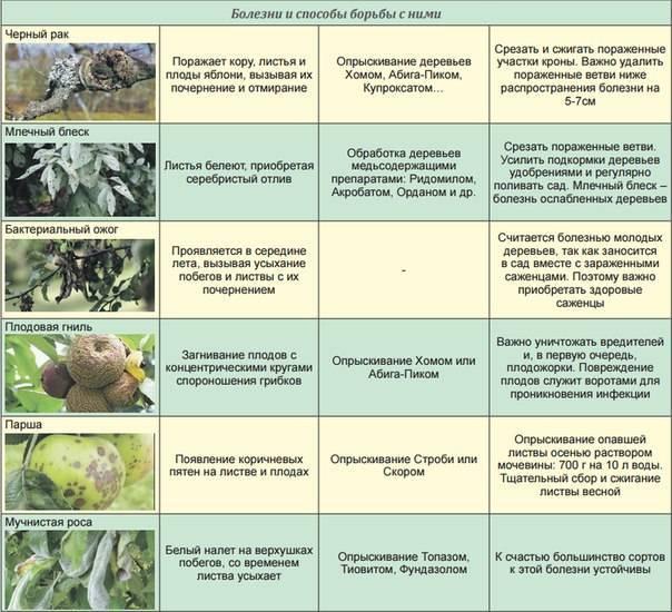 Как бороться с тлей на яблоне: народные средства и препараты