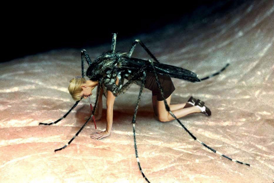 Интересные факты о комарах: сколько весит, когда спят, скорость и т.д.