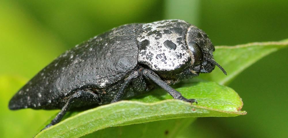 Боремся с личинками майского жука — ботаничка.ru