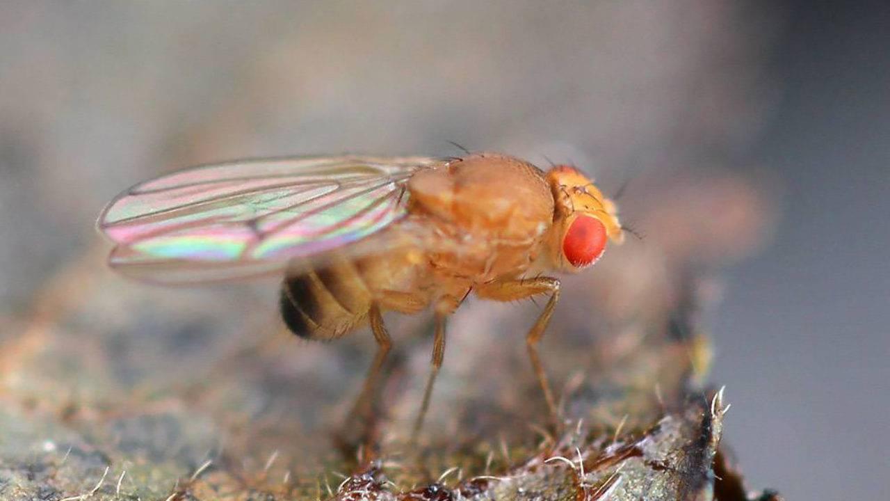 Как избавиться от мелких мошек на кухне и в доме, чтобы не нажить крупных проблем? откуда берутся насекомые?